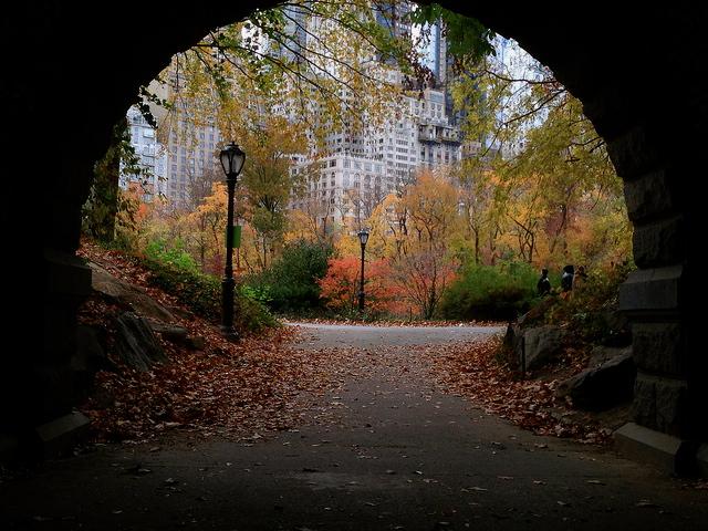 Central Park Autumn 1