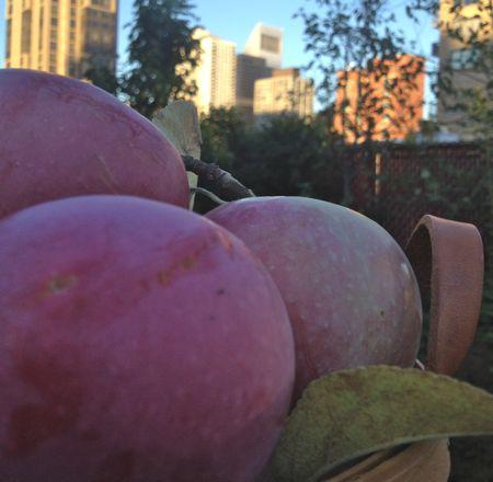 BIg Apple Apples
