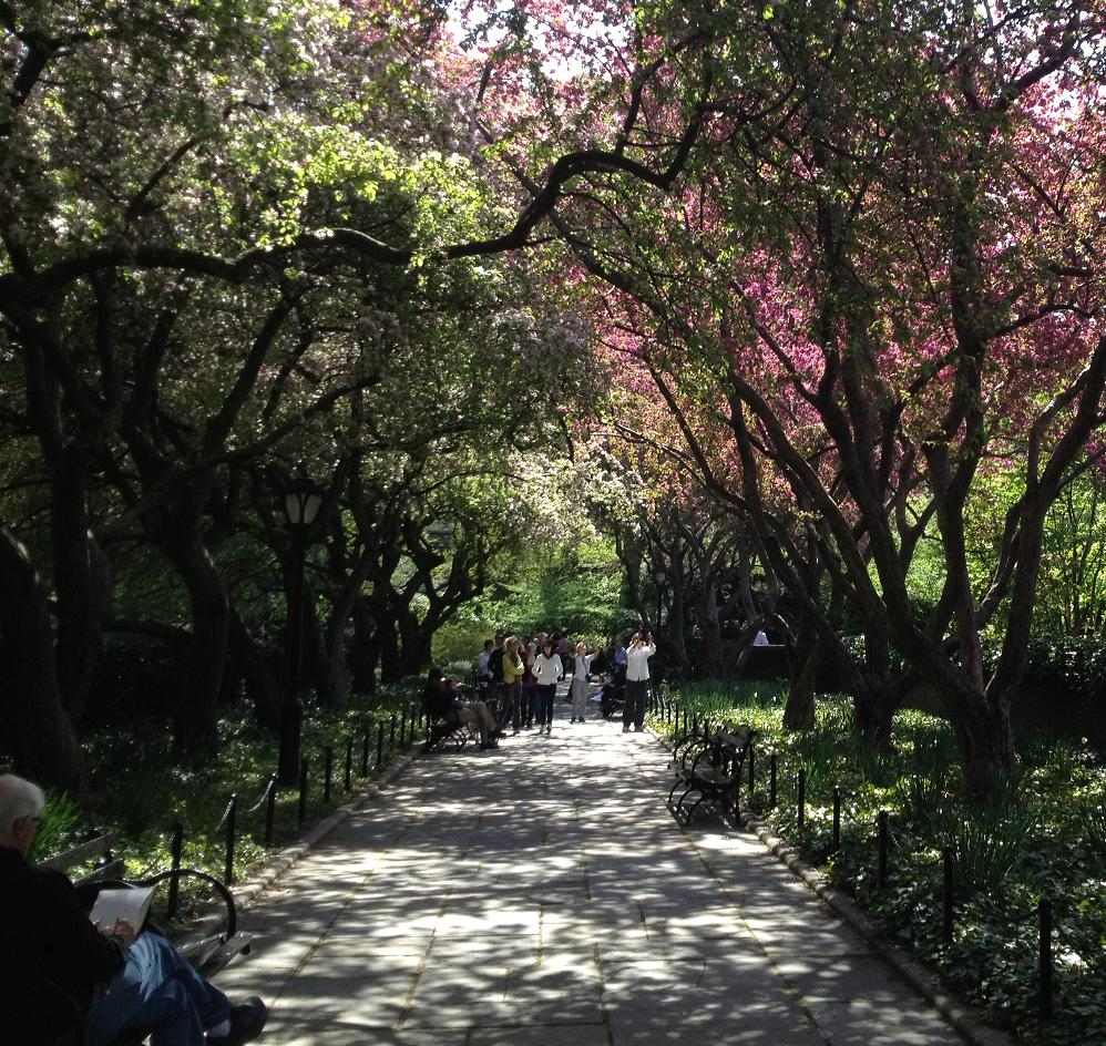 Central Park Conservancy 4