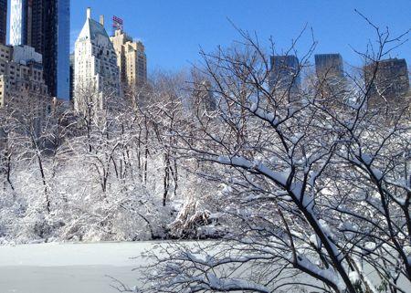 Central Park Snow 1