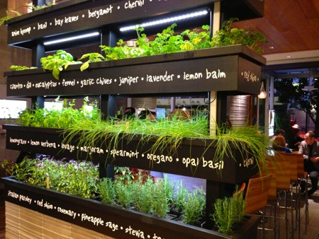Lyfe herb garden